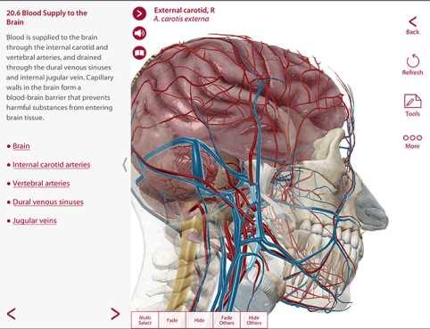 可见身体解剖与生理学