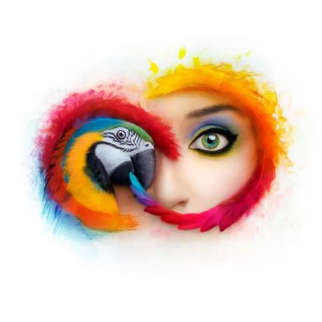 Adobe CC 2019 Win/Mac 全家桶软件 中文大师版 破解版 免费下载